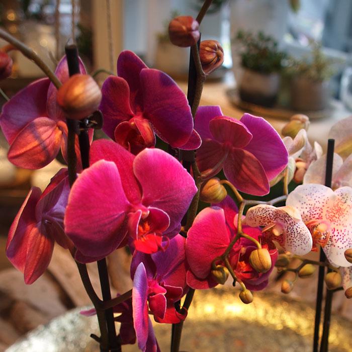 Blumen liefern lassen - Gärtnerei Müller Marienheide